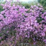 富良野市の花はラベンダーではない!