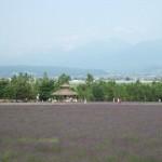ラベンダー園最新リポート(09/06/26)