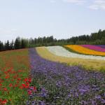 「彩りの畑」の8年を振り返る