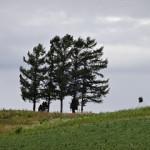 5本ではなくなった5本の木