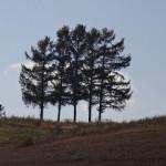 5本に戻った5本の木